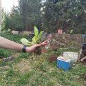 הגינה הקהילתית של המדרשה ותושבי השכונה- גם בימי הקורונה
